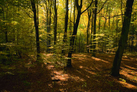 Autumn forest Stock Photo - 15982242