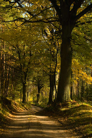 Vecchio albero in autunno photo