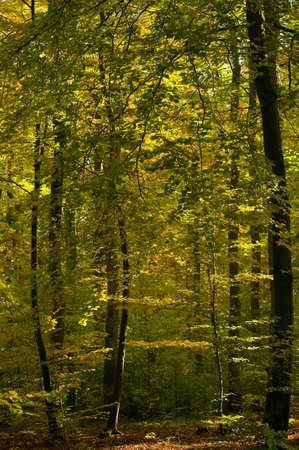 Autumn forest Stock Photo - 15979012