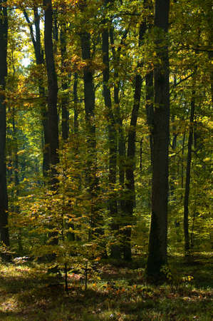Autumn forest Stock Photo - 15978989