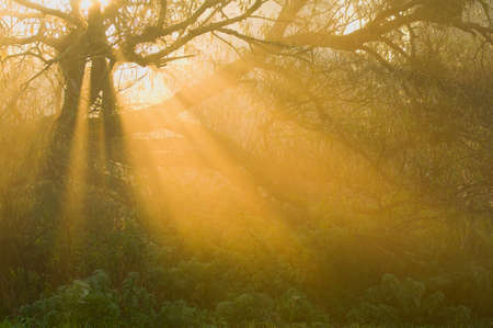 Morning fog and rays of the rising sun breaks through the trees photo