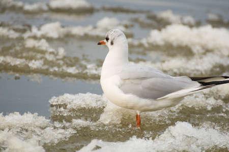 Seagull Stock Photo - 17089038