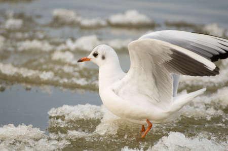 Seagull Stock Photo - 17089045