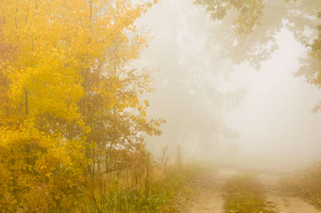 Autumn mist photo
