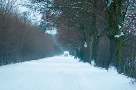 tree removal service: Winter road