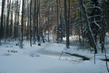 Winter forest Stock Photo - 17322365
