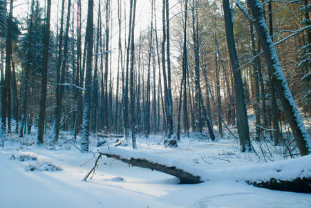 Winter forest Stock Photo - 17322377
