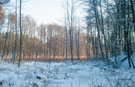 Winter forest Stock Photo - 17322397