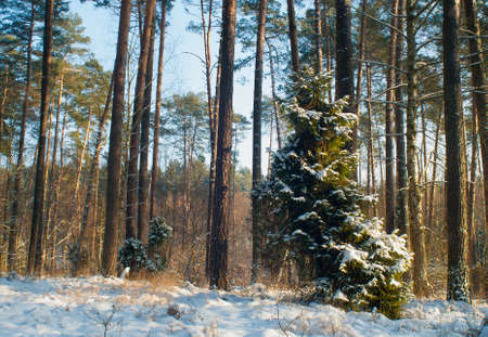 Winter forest Stock Photo - 17322385