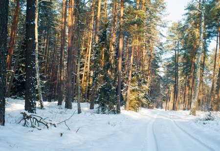 Winter forest Stock Photo - 17322382