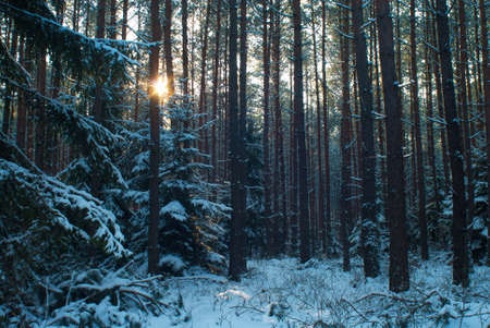 Winter forest Stock Photo - 17322380
