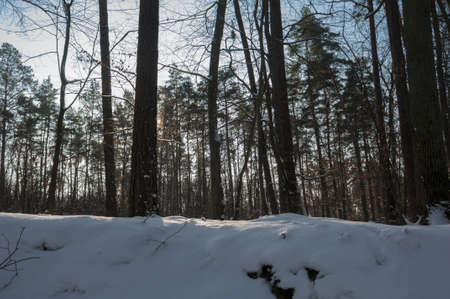 Winter forest Stock Photo - 17322362