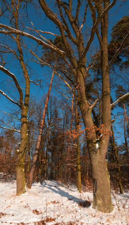 Winter forest Stock Photo - 17322411