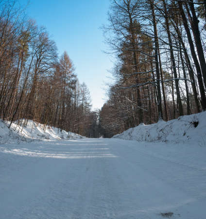 Winter forest Stock Photo - 17322363
