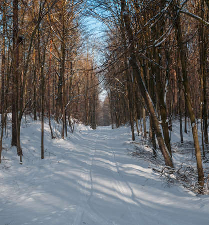 Winter forest Stock Photo - 17322388