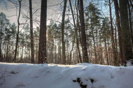 Winter forest Stock Photo - 17322371