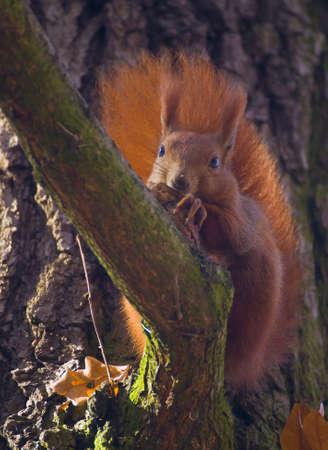 Squirrel Stock Photo - 17322356