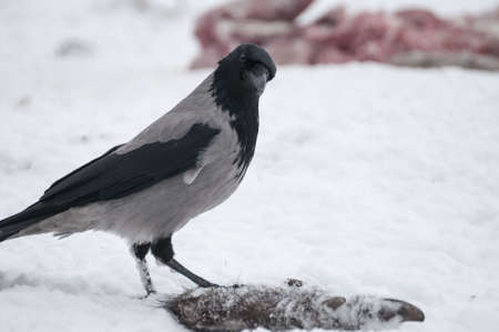 difficult period: dun crow