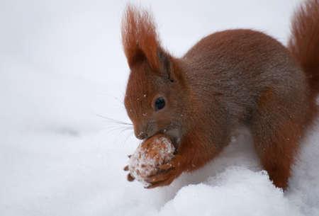 Squirrel Stock Photo - 17497125