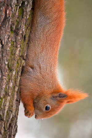 Squirrel Stock Photo - 17497450