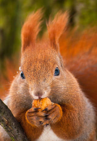 Squirrel Stock Photo - 17497438