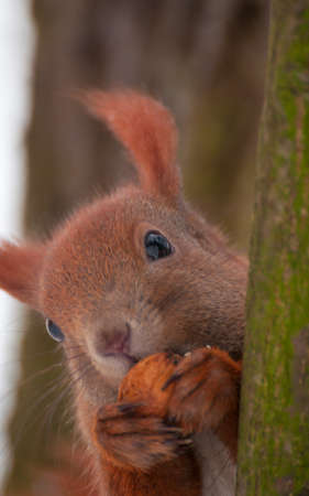 Squirrel Stock Photo - 17497131