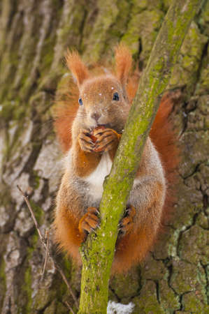 Squirrel Stock Photo - 17497456