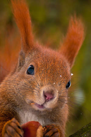Squirrel Stock Photo - 17497388