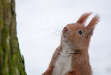 Squirrel Stock Photo - 17496986