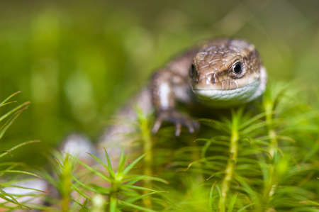 Lizard Stock Photo - 17497596
