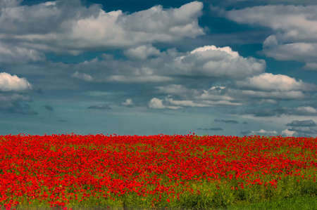 poppy field: Gebied van de papaver