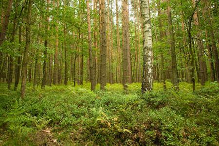 tree Stock Photo - 17874526