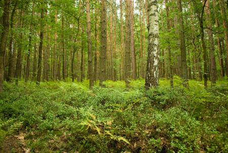 tree Stock Photo - 17874522