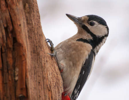 Woodpecker photo
