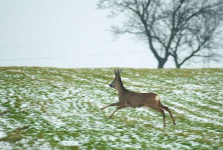 Herd of deer Stock Photo - 17874679