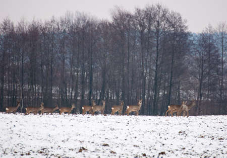 Herd of deer photo