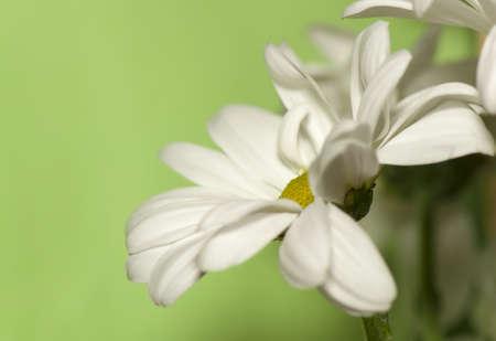 perianth: Flower