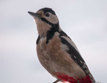 difficult period: Woodpecker