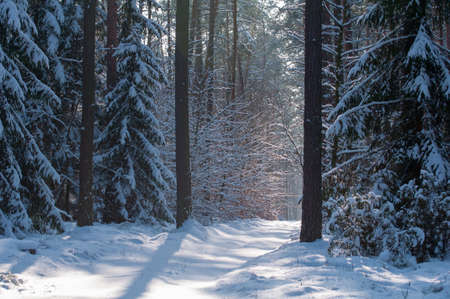 Winter forest Stock Photo - 18061008