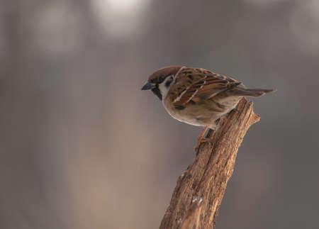 Sparrow Stock Photo - 18060905