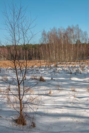 winter swamp Stock Photo - 18530664