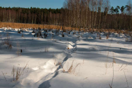 winter swamp Stock Photo - 18530607