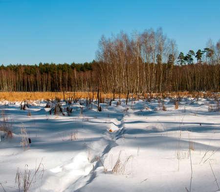 winter swamp Stock Photo - 18530657