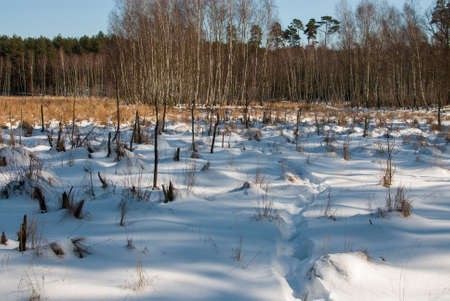 winter swamp Stock Photo - 18530566
