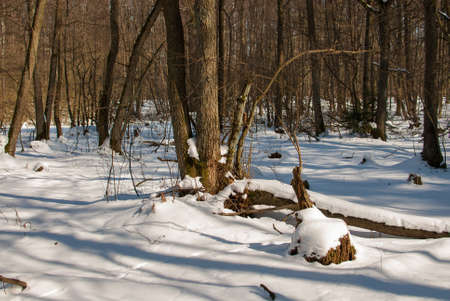 winter forest Stock Photo - 18530642