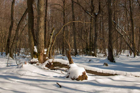 winter forest Stock Photo - 18530643