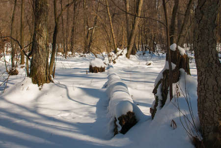 winter forest Stock Photo - 18530605