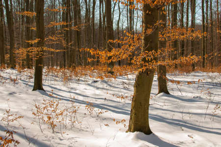 winter forest Stock Photo - 18552213