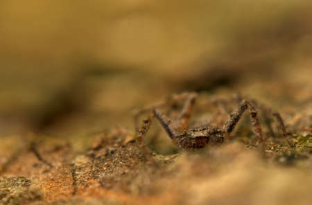 Spider - Philodromus Stock Photo - 18552187