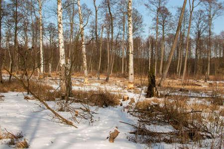 feeding ground beavers Stock Photo - 18552218